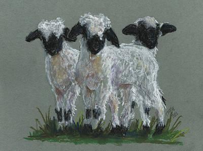 Pasta Al Dente - Valais Blacknose Lambs by Taphath Foose