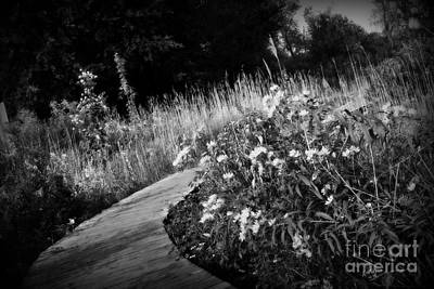 Frank J Casella Royalty-Free and Rights-Managed Images - Wetlands Wonder - Black and White by Frank J Casella