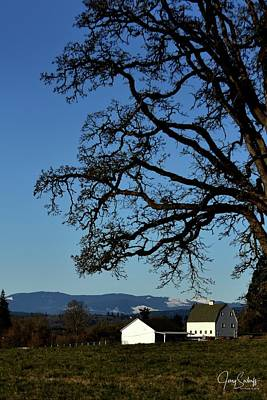 Jerry Sodorff Royalty-Free and Rights-Managed Images - White Barn Tree by Jerry Sodorff