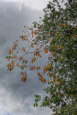Rights Managed Images - Early Fall Foliage Royalty-Free Image by Robert Ullmann
