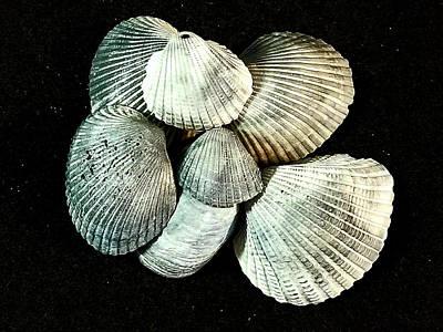 Vintage Automobiles - Shells of Tybee Island by Tracy Sayers Trombetta
