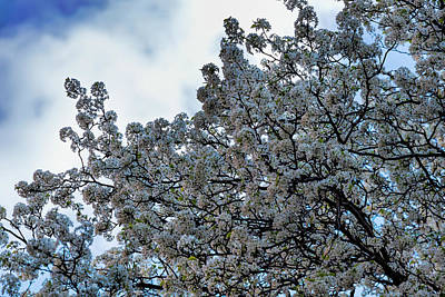 Science Collection Rights Managed Images - Cherry Trees Royalty-Free Image by Robert Ullmann
