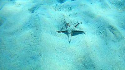 Bath Time - Sea Turtle Caretta - Caretta Zakynthos Island Greece by GiannisXenos Underwater Photography