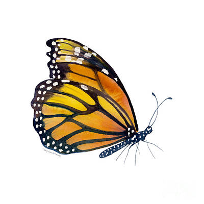Animals Paintings - 103 Perched Monarch Butterfly by Amy Kirkpatrick