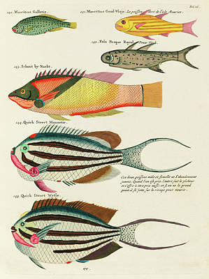 Surrealism Royalty-Free and Rights-Managed Images - Colourful and surreal illustrations of fishes found in Moluccas  by Celestial Images