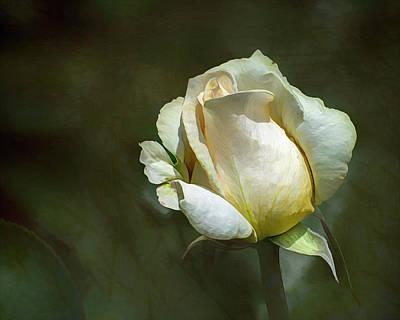 Spot Of Tea - Rose by Robert Carlsen