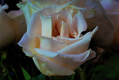 Studio Grafika Science - Roses by Robert Ullmann