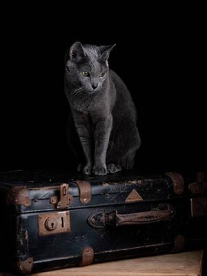 Photograph - Russian Blue Cat by Nailia Schwarz