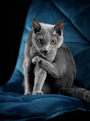 Photograph - Russian Blue by Nailia Schwarz