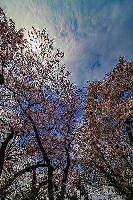 Mans Best Friend - Cherry Trees by Robert Ullmann