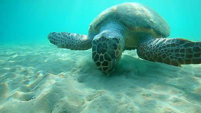 Vintage Pharmacy Royalty Free Images - Sea Turtle Caretta - Caretta Zakynthos Island Greece Royalty-Free Image by GiannisXenos Underwater Photography