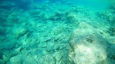 Catch Of The Day - Sea Turtle Caretta - Caretta Zakynthos Island Greece by GiannisXenos Underwater Photography