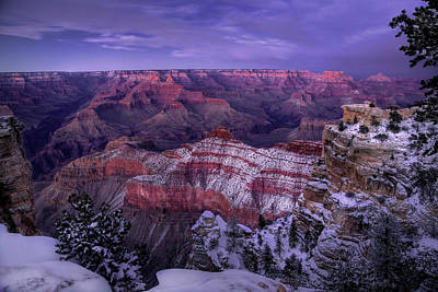 Moody Trees - Grand Canyon Winter by Michael Just