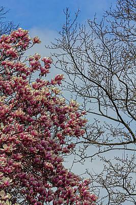 Priska Wettstein Land Shapes Series - Magnolia Tree by Robert Ullmann