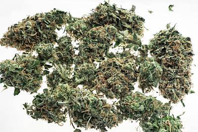 Comedian Drawings - Medical Marijuana Cannabis Buds Closeup On White Studio Backgrou by JM Travel Photography