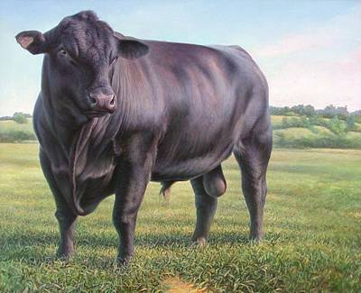 Landscapes Royalty-Free and Rights-Managed Images - Angus Bull by Hans Droog