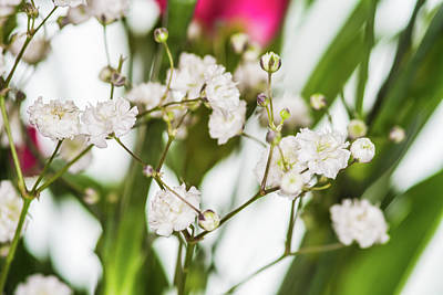 City Scenes - Closeup Gypsophila On Blur Background Of Other Gypsophila. by David Ridley