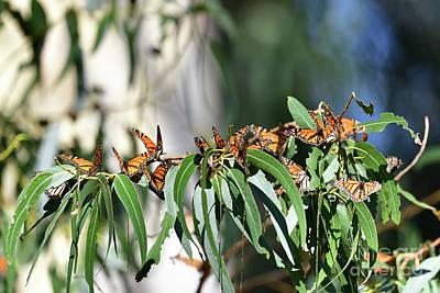 Travel - Monarch Butterfly by Bipul Haldar