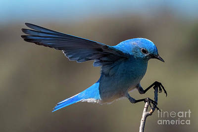 Pasta Al Dente - Mountain Blue Landing by Mike Dawson