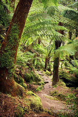 Photograph - Otways National Park by Tim Hester