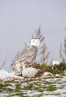 Winter Animals - Pretty Female by Linda Kerkau