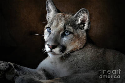World Forgotten - The Mountain Lion by Savannah Gibbs
