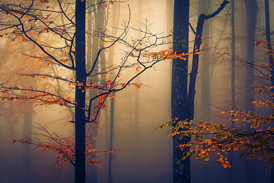 Patriotic Signs - Trees in the Mist by Evgeni Dinev
