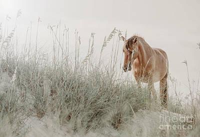 Animals Photos - Wild Horse on the Beach by Diane Diederich