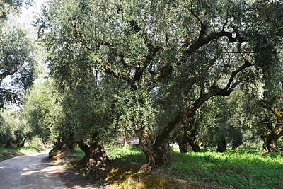 Keith Richards - Olive trees Greece by GiannisXenos Photography