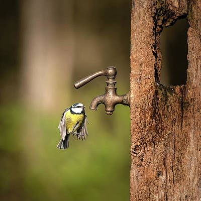 Fathers Day 1 - Image of Blue Tit bird Cyanistes Caeruleus on wooden post with r by Matthew Gibson
