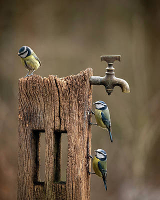 Mannequin Dresses Rights Managed Images - Image of Blue Tit bird Cyanistes Caeruleus on wooden post with r Royalty-Free Image by Matthew Gibson