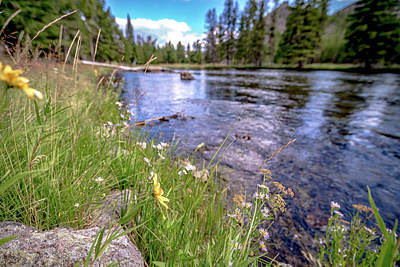 Mellow Yellow - Beautiful Nature Scenes Along Yellostone River In Wyoming by Alex Grichenko
