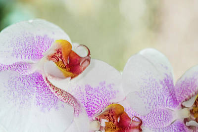 City Scenes - Beautiful pink and white spotted Orchid closeup by David Ridley