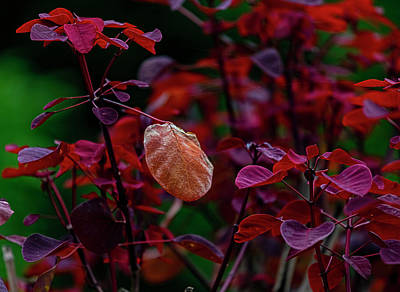 Latidude Image - Red Leaves by Robert Ullmann