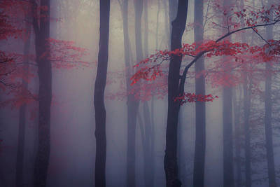 Everett Collection - Trees in the Mist by Evgeni Dinev