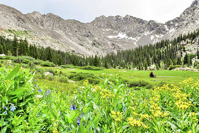 Photograph - Wildflowers in the Rockies by Tonya Hance