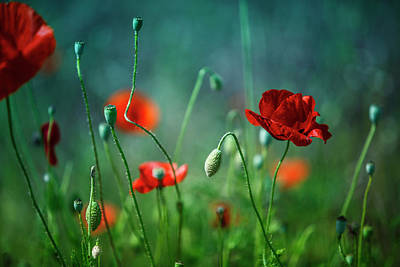 Mistletoe - Summer Poppy Meadow by Nailia Schwarz
