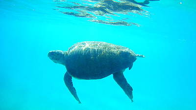 Sultry Plants - Sea Turtle Caretta - Caretta Zakynthos Island Greece by GiannisXenos Underwater Photography