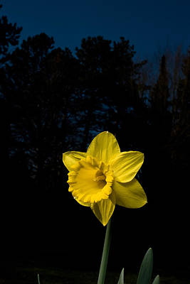 Ps I Love You - Narcissus Flower by Marcio Faustino