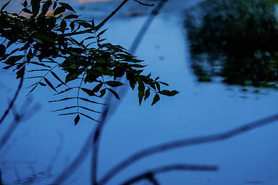 Royalty-Free and Rights-Managed Images - Overhanging Branches and leaves by the River Bela in Beetham UK by David Ridley