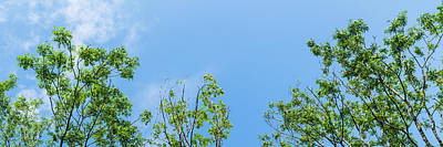 Royalty-Free and Rights-Managed Images - Panorama of tops of trees in forest against blue sky with clouds background by David Ridley