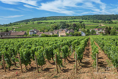 Photograph - View of in the vineyard in Burgundy Bourgogne home of pinot noir and chardonnay in summer day with blue sky. Cote d'Or by Beautiful Things
