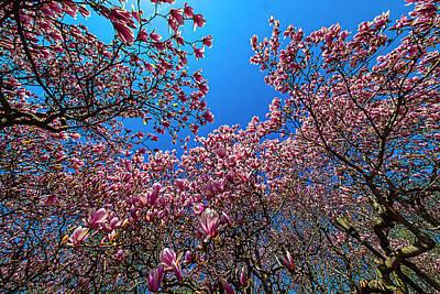 Typography Tees - Magnolia Trees by Robert Ullmann