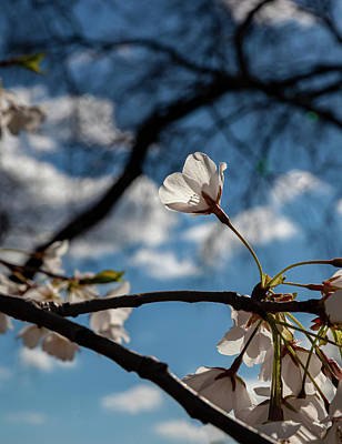 1-war Is Hell - Cherry Blossoms by Robert Ullmann