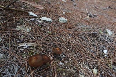 Katharine Hepburn - Mushrooms Greece by GiannisXenos Photography