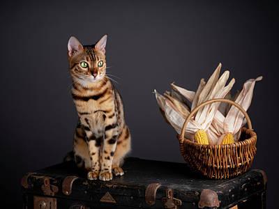 Photograph - Bengal Cat Portrait by Nailia Schwarz
