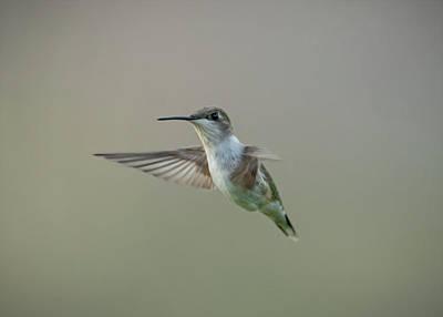 Aloha For Days - Hummingbird  by Jan M Holden