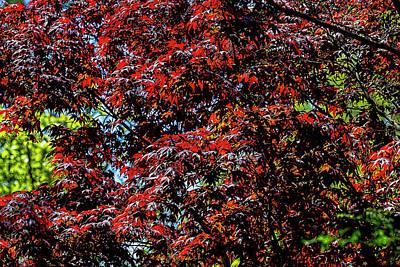 Modern Kitchen - Spring Leaves by Robert Ullmann