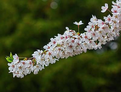 Priska Wettstein Land Shapes Series - Cherry Blossoms by Robert Ullmann