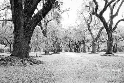 Kim Fearheiley Photography - Infrared Allee of Oaks by Dale Powell